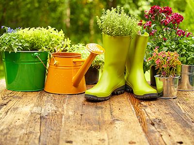 new-daily-170615-garden