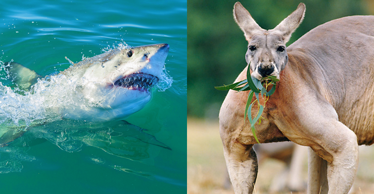 forget sharks these are the deadliest animals the new daily