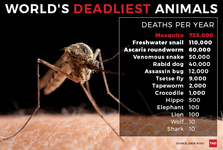 These are the deadliest animals in the world | The New Daily