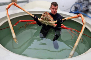 Getty spider crab