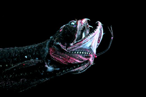 scaly-dragonfish