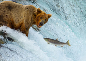 You wouldn't approach a hungry bear, it is the same with a hangry person. Photo: Shutterstock.