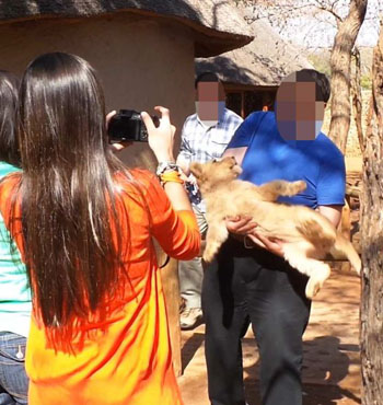 Tourists are able to interact with lion cubs in a facility in Southern Africa.