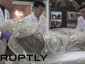 Scientists extracted DNA from the leg of a well-preserved woolly mammoth in March. Photo: YouTube