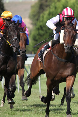 Horse racing is particularly popular with big punters. Photo: Shutterstock