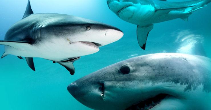 Australia has the most fatal shark attacks worldwide.
