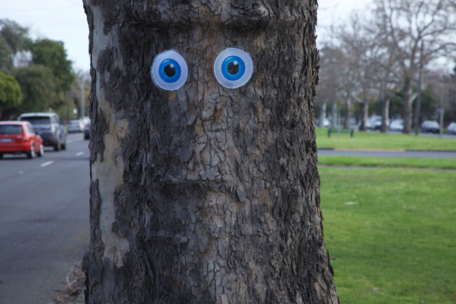 Perhaps this tree is scared she's off to the wood chipper. Photo: The Weekly Review