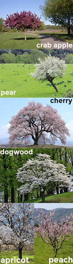 types-of-tree