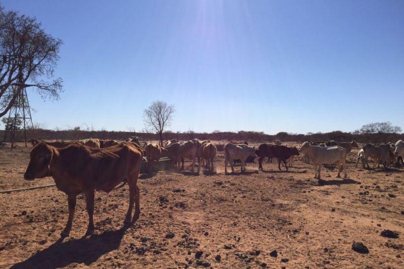 bureau-drought-warnings
