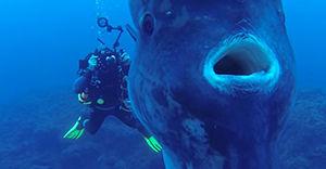 diverbloke