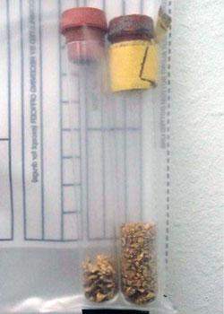gold kimberley theft
