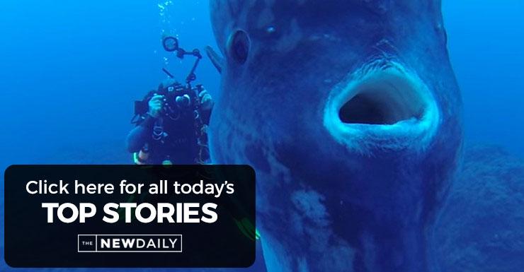 mola-mola-top-stories
