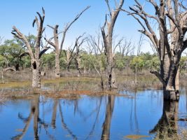 Number of properties across the Murray–Darling Basin has halved.