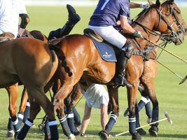 Prince Harry falls off his horse for a second time.