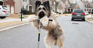 dogonscooter