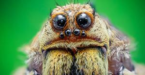 spider-edm2