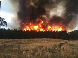 Flames shoot high above trees in Elaine. Photo courtesy of CFA volunteer.