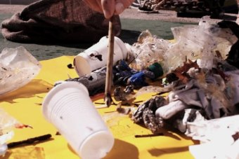 Rubbish collected by the Seabin can harm marine life if allowed into the open ocean. Photo: ABC/Seabin Project)
