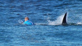 Mick Fanning shark