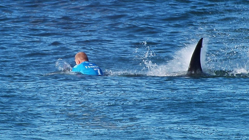 Mick Fanning shark