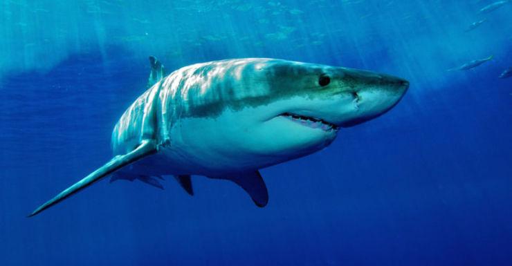 wa shark attack