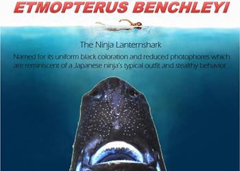 nina shark