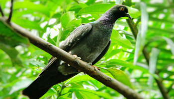 Low Angle View Of Pigeon Perching On Tree