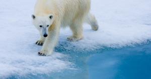 polar-bear-edm