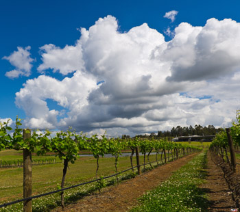 The region is littered with vineyards and cellar doors – some with their own restaurants. Photo: Getty