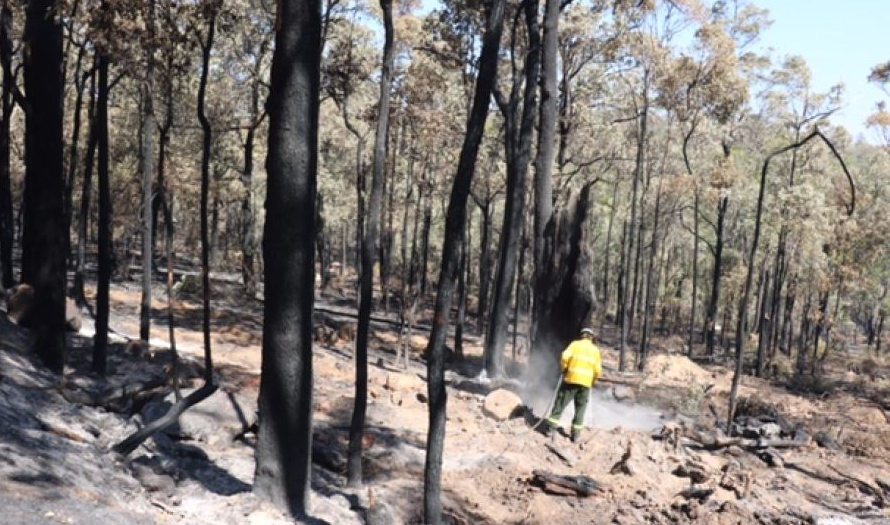 The fires have caused significant damage. Photo: ABC/Charlotte Hamlyn
