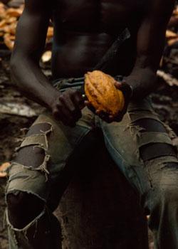 gagnoa cacao beans