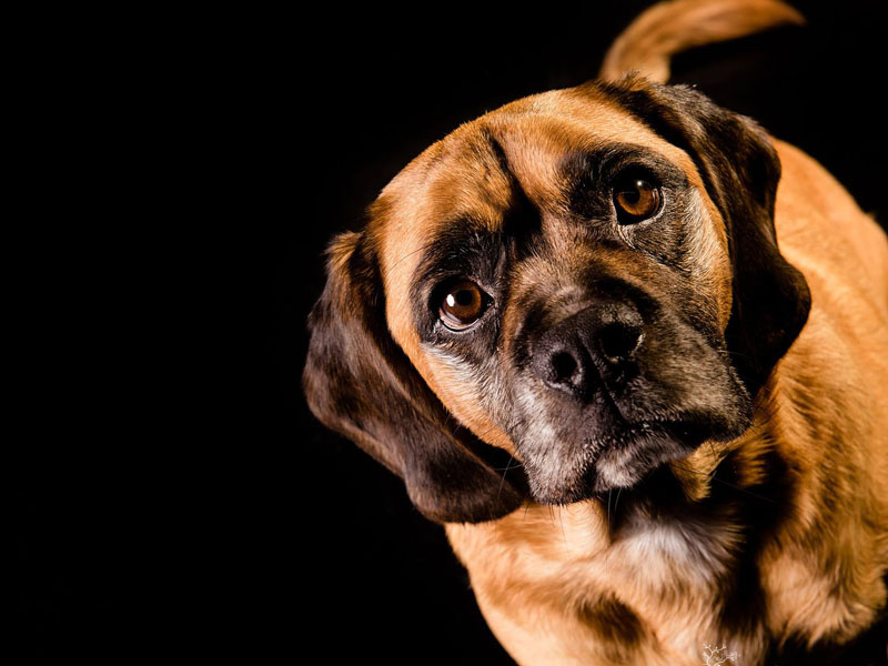 Even family pets are photographed – captured from their best side, of cou