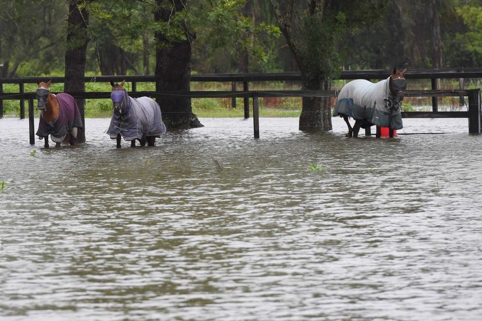 Low-lying properties have been inundated with floodwater. Photo: AAP