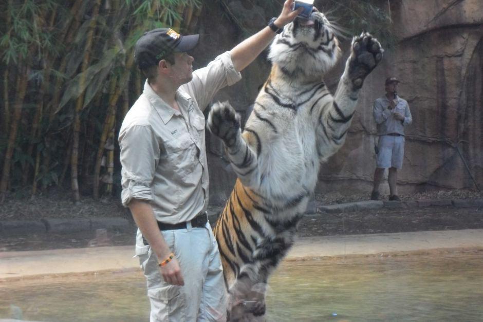 Big cat keeper