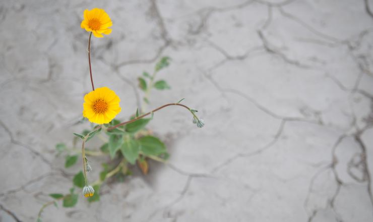 plantsindrought