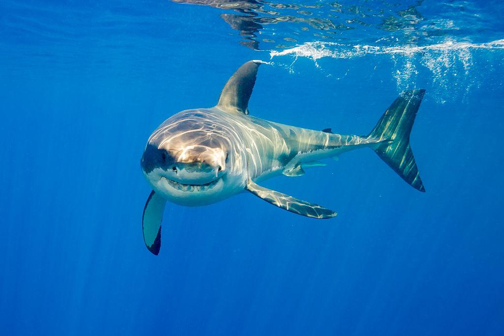 Shark attack victim dies in WA