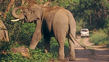 The elephant went through a crushing ordeal. Photo: AAP