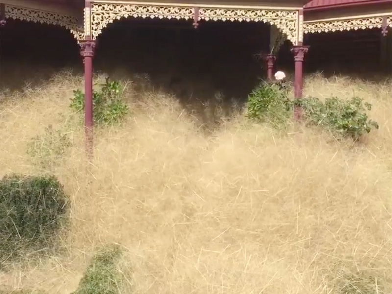 hair panic grass