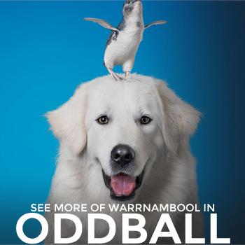 warrnambool oddball trailer