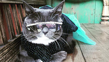 That's one cool cat. Photo: Instragram