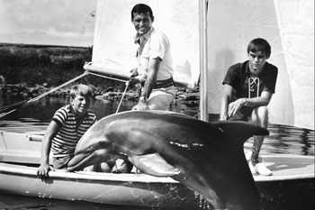 Flipper ran from 1964 until 1967. Photo: AAP