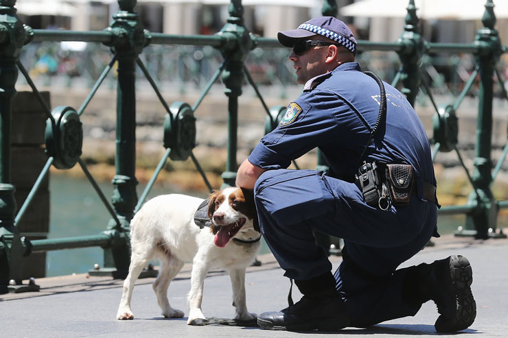 A police dog and handler work during the Lindt cafe siege in Sydney. Photo: Getty