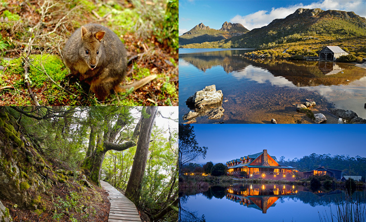 Clockwise from top left: a pademelon, Dove Lake, Peppers Cradle Mountain, a walking track.