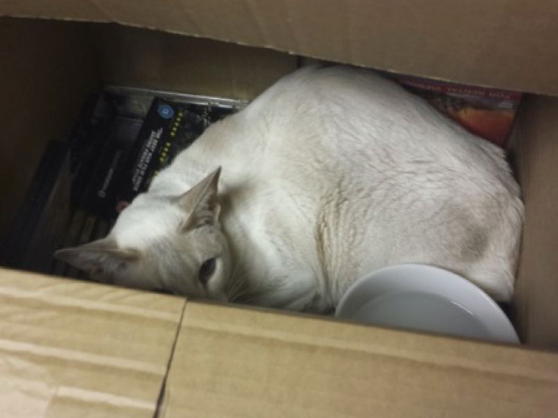 Cupcake was found in a box of DVDs.