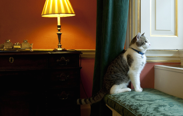 Chief Mouser Larry keeps watch over No. 10 Downing Street. Photo: Getty