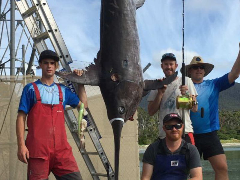 The monster fish weighted more than 200kg.