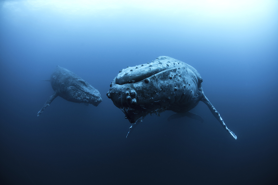 Scientists share creepy audio from bottom of the sea