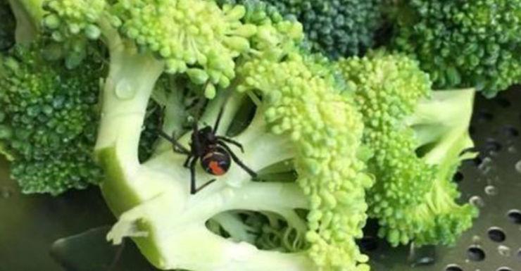 woolworths spider broccoli