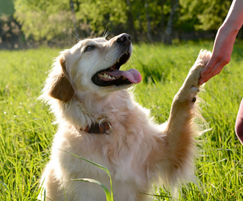 Giving you a paw doesn't always mean they want to shake on it. Photo: Getty/Supplied