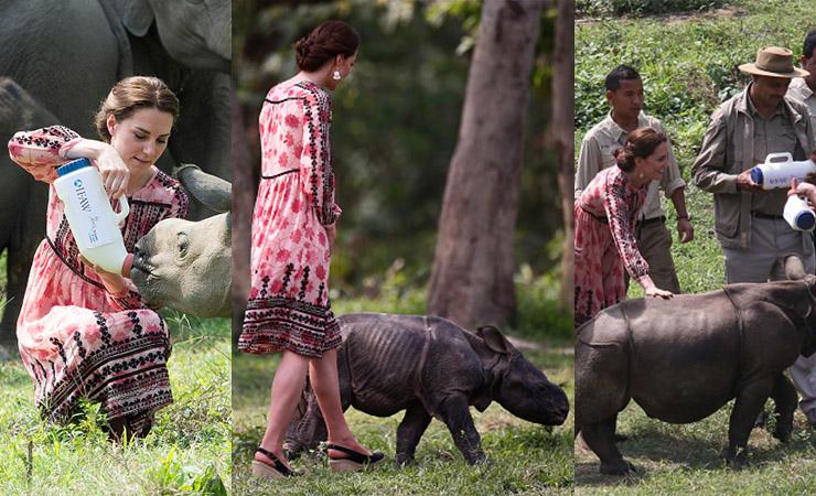 kate iddleton rhino